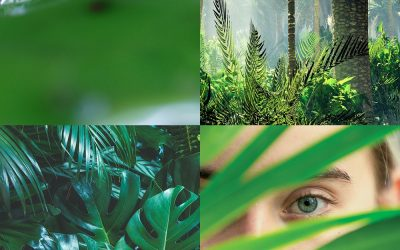 How Skin Compares to an Ecosystem